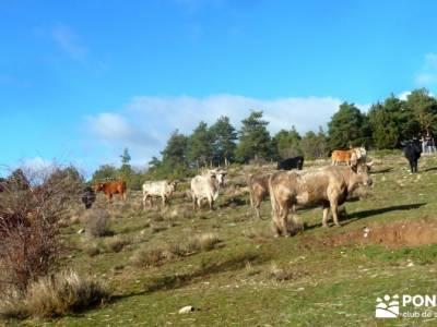 Acebos Montes Carpetanos; viaje senderismo; excursiones semana santa